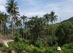 42 Rai Land Plot Chaweng Noi Seaview