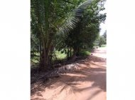 1 Rai Flat Land, Maenam, For Sale
