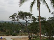 12 Rai (7/5Rai Plots) Chaweng Noi Seaview For Sale, 4.5M per rai