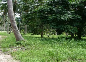 Land in Lamai