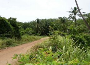 Land for sale in Banthai