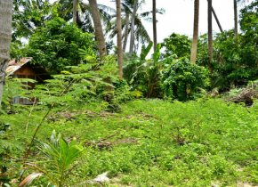 Land for sale close to Maenam beach