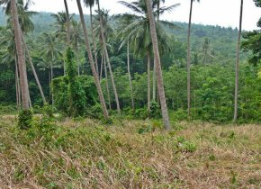 Nice plot of land with hills views for sale in Samui
