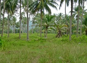 4 Rai plot of land for sale in Bang Kao