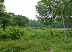 Huge 17 rai plot of land for sale in Samui