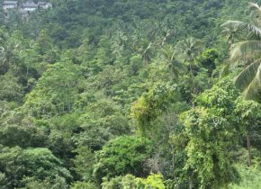 SEA VIEW LAND IN CHAWENG NOI HILL FOR SALE